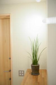 植物とモデルハウス |八戸市 工務店