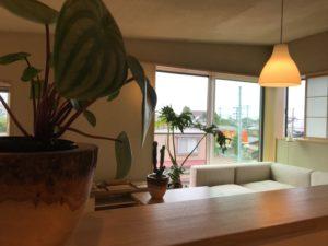 モデルハウス と植物|八戸市 工務店
