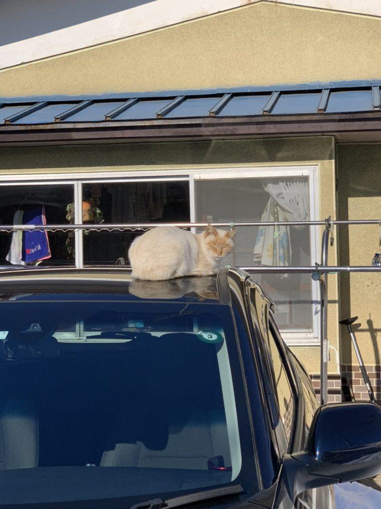 車の上に猫|おいらせ町 新築住宅